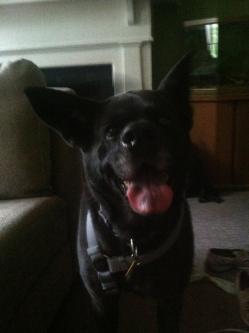 Dixie Dog